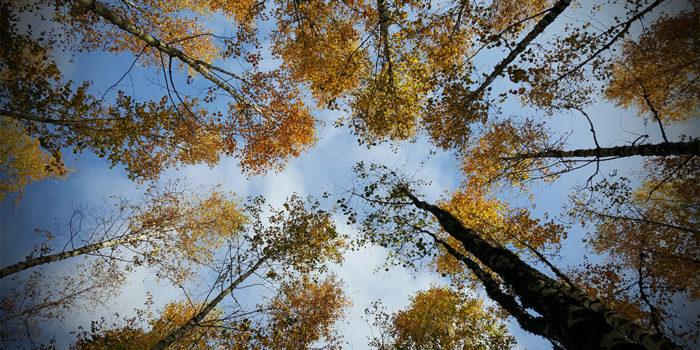 Mälarenergi vill använda livscykelanalys för att bedöma vart i kedjan en produkt har störst påverkan på miljön och klimatet.