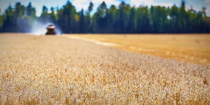 En Revaq-certifiering innebär att slammet får spridas på jordbruksmark.
